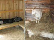 Как утеплить сарай для коз на зиму